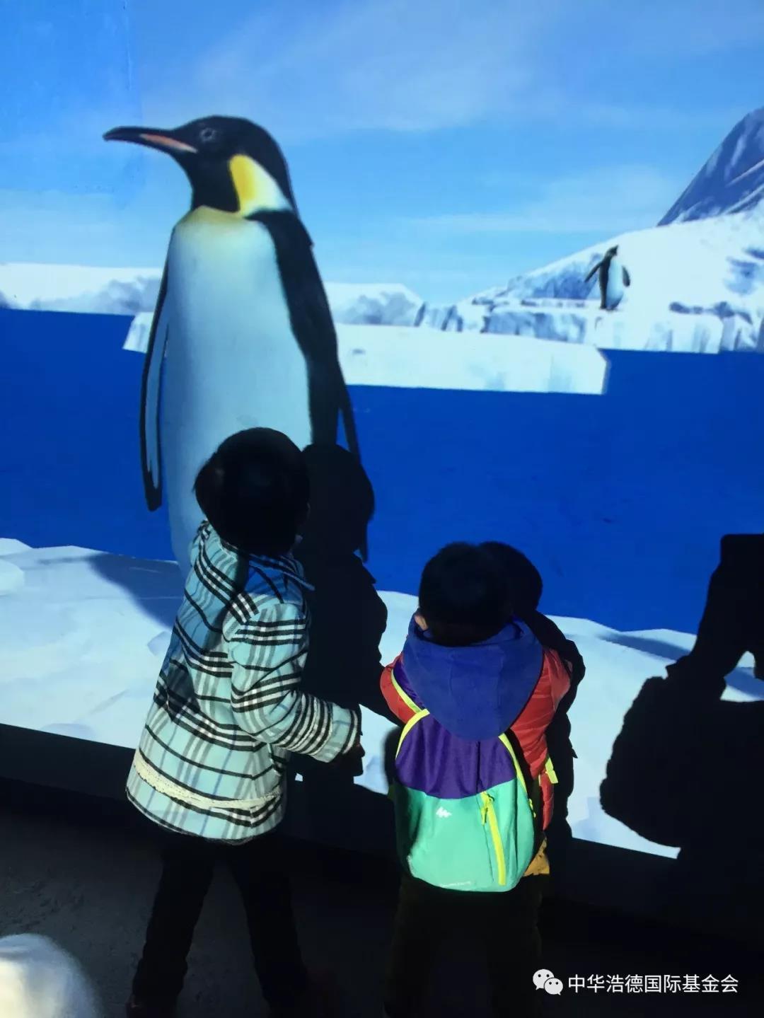 观看海豚剧场的动物表演时,舞台中央憨态可掬的海豹做出各种逗趣的